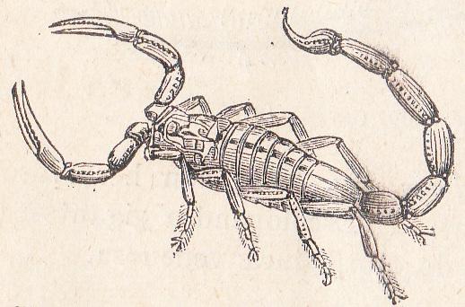 Escorpión, Siglo XIX, Col. Particular.