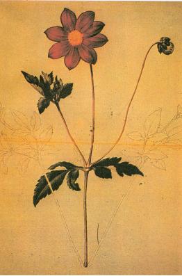Ejemplares de flora mexicana de SesAi?? y MociAi??o