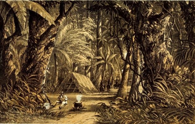Picadura Amate (800x461)