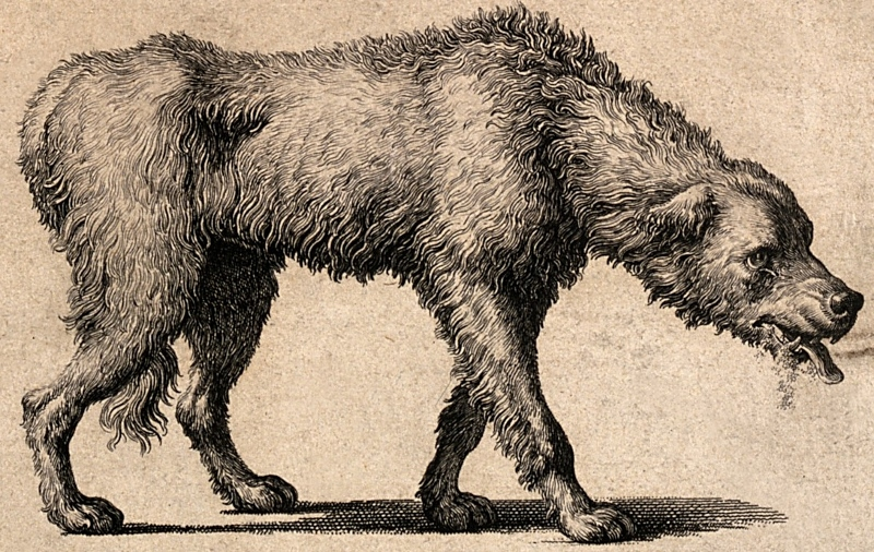 V0010532 A dog with rabies and a detail of its skull. Line engraving